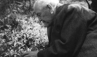 Yaban Çilekleri Filmi (1957) Hikayesi